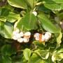 Pozostałe, Październikowe love........... - .................i owoce na krzewie.............