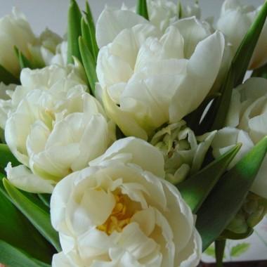 ............i tulipany............