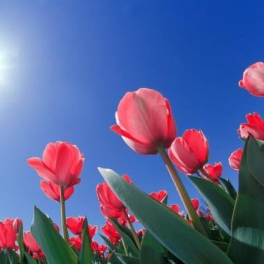 Dużo słońca dla Wszystkich Kobiet :)