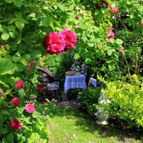 Róże moje.....
