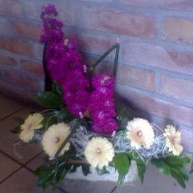 Kwiaty i kompozycje