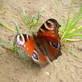 Motyle, motyle zaczekajcie choc chwilę...