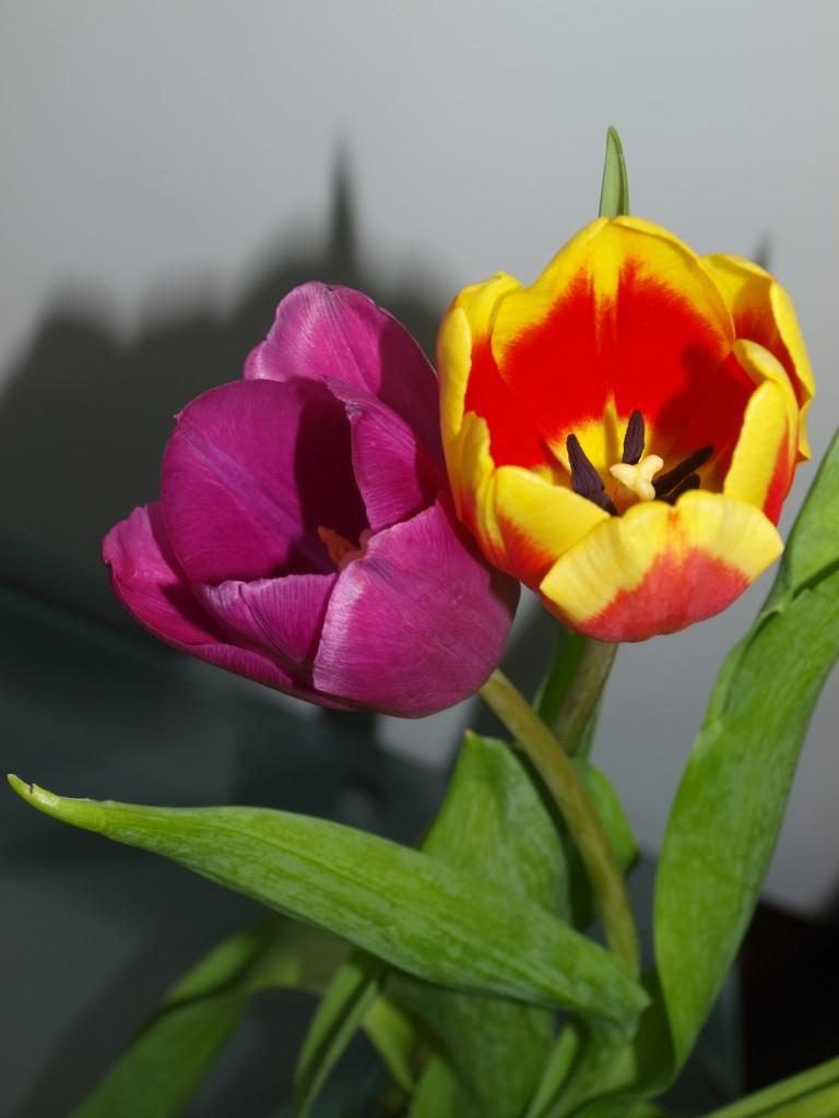 Rośliny, Kwiatowa