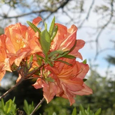 ............i kwitnący ogród..............