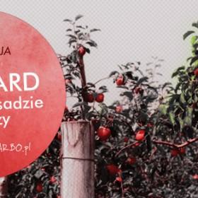 Orchard, czyli co w sadzie piszczy