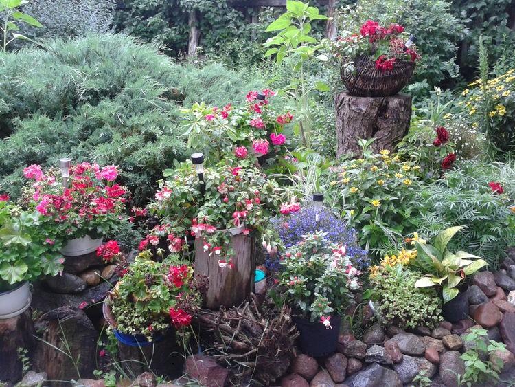 Ogród, moj ogrod - Moj ogrod okolica w ktorej mieszkam