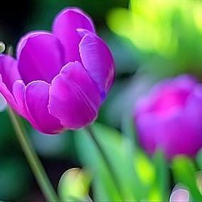 Przepiękne kwiatki