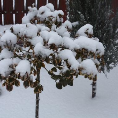 ostatnie zdjęcia zimy,bo wiosna tuż tuż,,