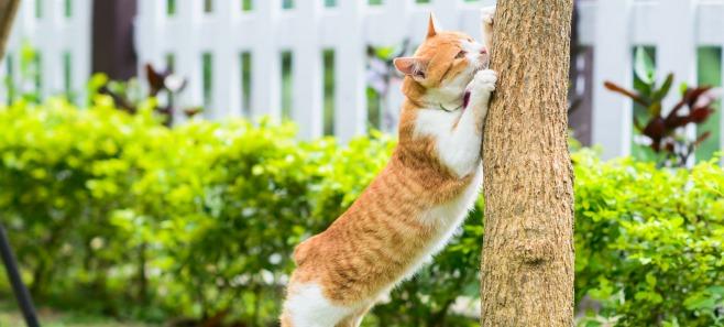 Rośliny odstraszające koty z ogrodu