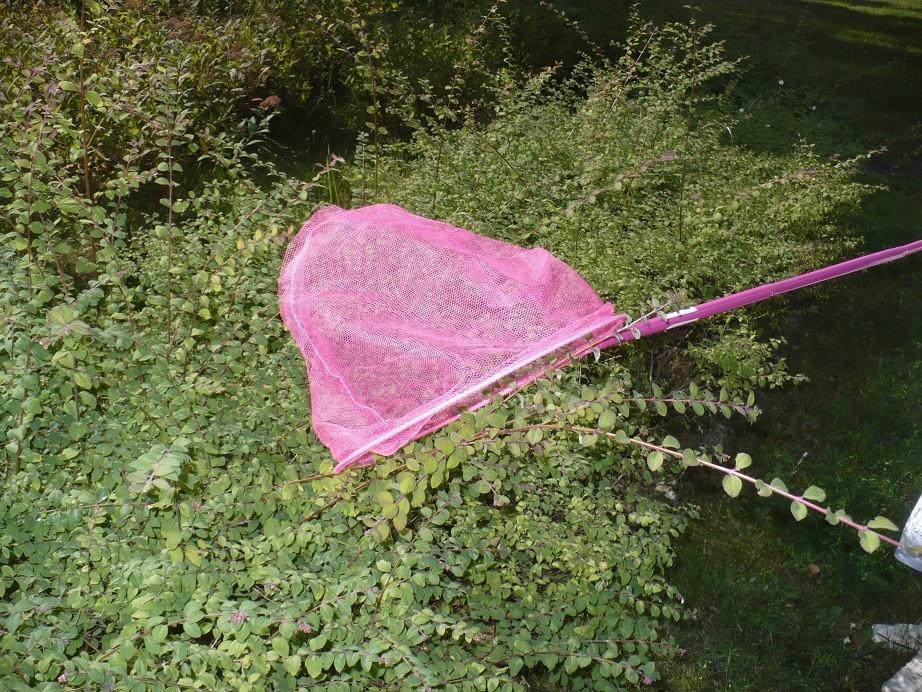 Pozostałe, Sierpniowe love................. - ...............i ............jest motylek.............