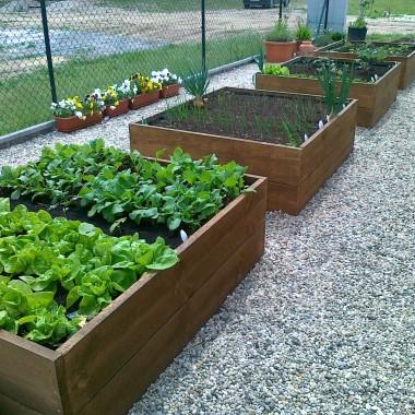 Mini ogródeczek
