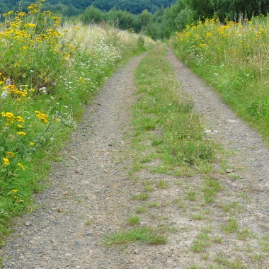 droga prowadząca do lasu