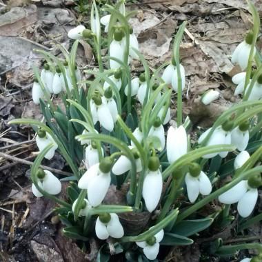 Idzie wiosna....