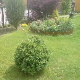 ogród mojej mamy
