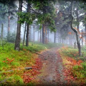 Jesienna wyprawa do lasu.