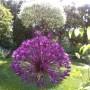 Pozostałe, Wiosna - kolejna odsłona... - Z tej perspektywy czosnek i wierzba mają taką samą wielkość.....:)