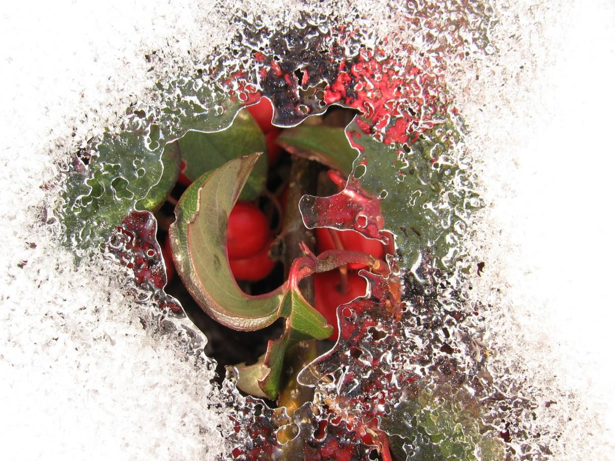 Rośliny, Przedwiośnie - Z niewoli wyrwijcie lodowej obręczy, w kajdanach zakutym przyjdźcie z orężem!