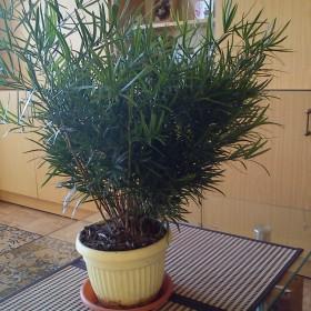 Co to za roślina i jak ją pielęgnować?