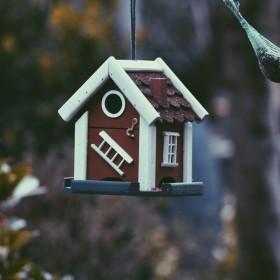 Budki dla ptaków w ogrodzie – jak dobrać i gdzie powiesić?