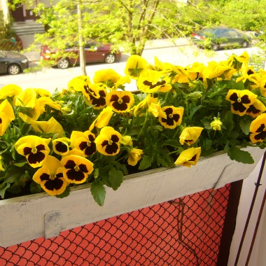 Wiosna u mnie na balkonie!!
