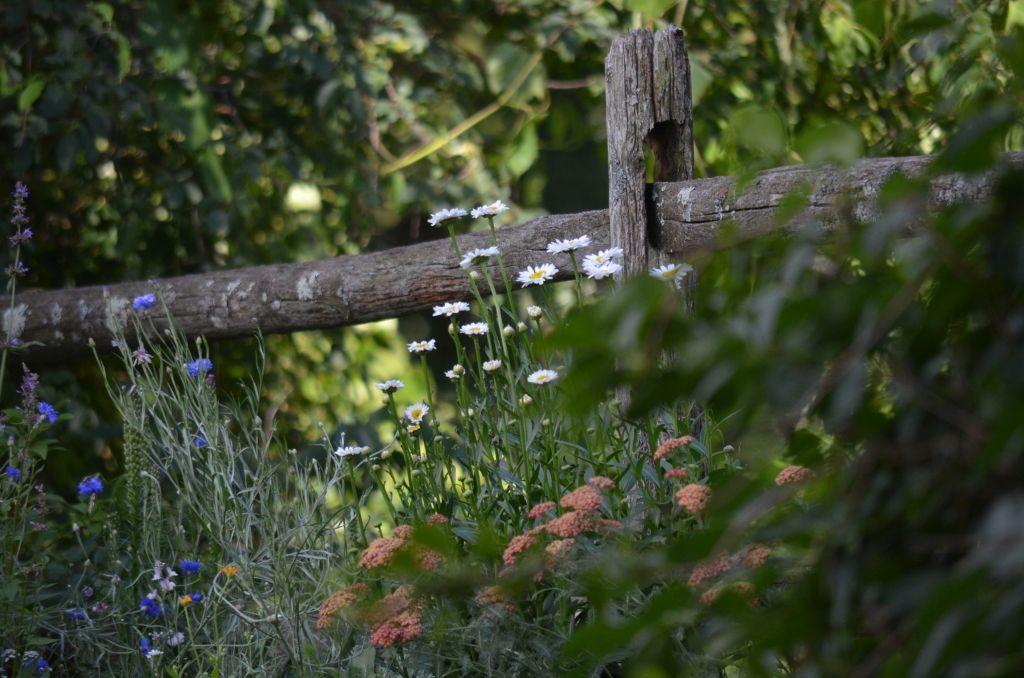 Pozostałe, Letnia galeria - łąka kwiatowa