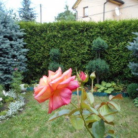 koniec lipca w ogrodzie i balkonie