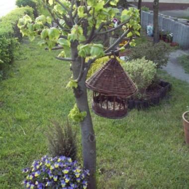 Ogródek przed blokiem