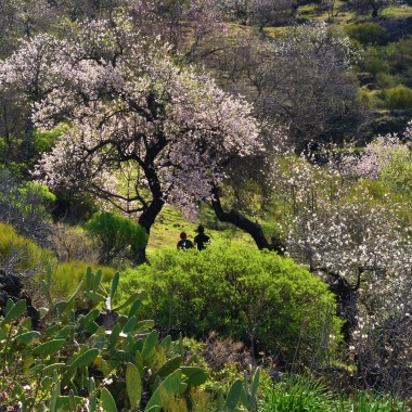 kwitnące migdały ... raj dla oka