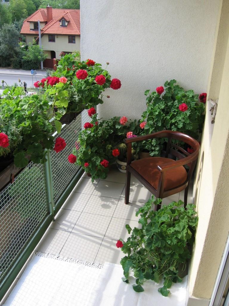 Balkon, Klasyka na balkonie: pelargonie - Klasycznie z pelargoniami