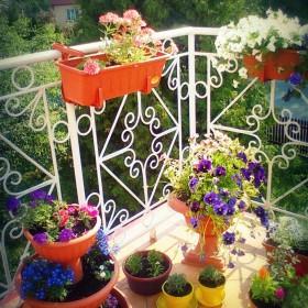 Mój balkon 2011