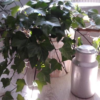 Nowy kwiatuszek i stara konewka-prezent wyszperana na targu staroci :)