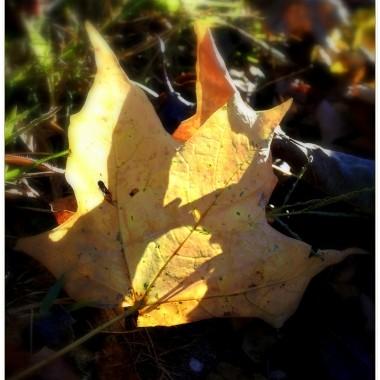 liście....