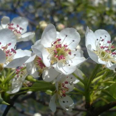 Jeszcze troszkę wiosny