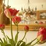 Pozostałe, Kwietniowa..... wiosenna .....galeria............ - .....................i wiosna w domu.................
