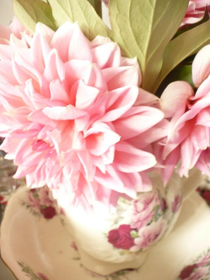 Rośliny, Rajskie jabłuszka .........i....... angielskie róże............. - ...............i georginie.............