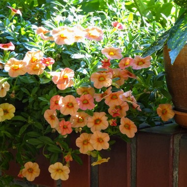 Październik w przekroju. Pamiętacie jeszcze o tej ciepłej jesieni, zmieniającej barwy prawie co dzień? Teraz szale, kurtki, parasole a w domu herbata i kot ocieplacz na kolanach.