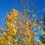 Ogród, Już listopad ............. - ............i złote liście w promykach słońca...............