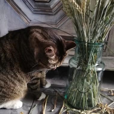 Fajans, porcelana, odrobina kota...