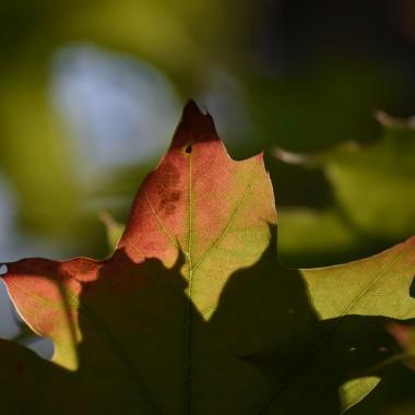 Gdzie lato spotyka się z jesienią ?Może na łące albo w lesie...W parku?Nad stawem?A może właśnie siedząPrzy stoleI razem piją kawę:)Celowo użyłam personifikacji dla lata i jesieni jako dwóch osób spotykających się przy kawie.Uosobiłam,nadałam cechy ludzkie dla pór roku.Często tak jest,że mówimy o wiośnie lub jesieni naszego życia.Jesteśmy na różnych jego etapach .Najważniejsze jednak co mamy w sercu.Lubię jesień za jej barwy ale wiosny w sercu Wam życzę bo najważniejsze jest być młodym duchem,tańczyć w deszczu,kochać z całych sił ...i żyć pięknie.