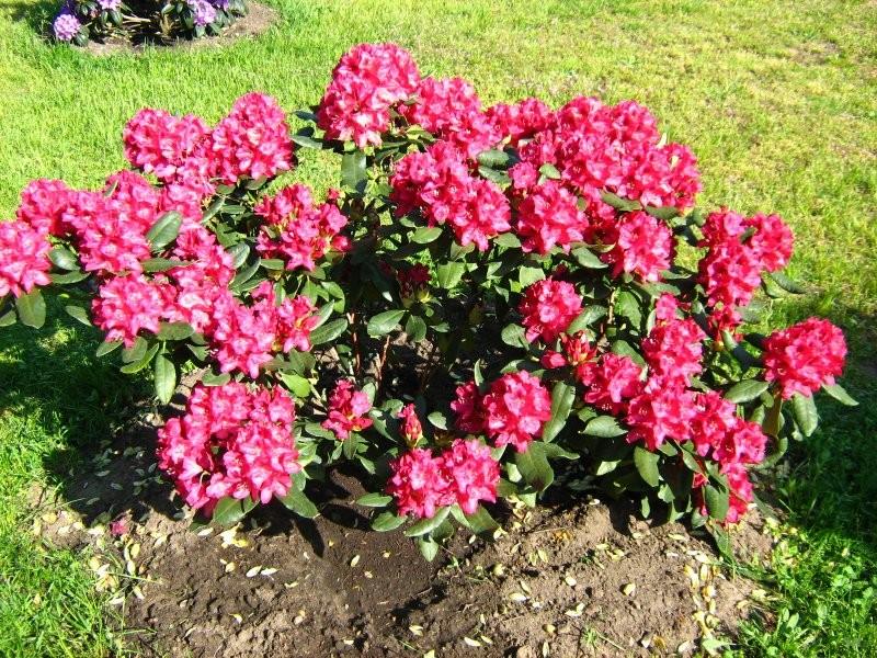 Rośliny, Tęsknota za wiosną