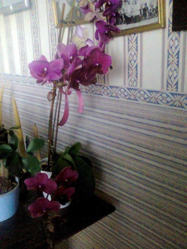 Rośliny, Moje storczyki - Często zmieniam storczykom miejsce pobytu.