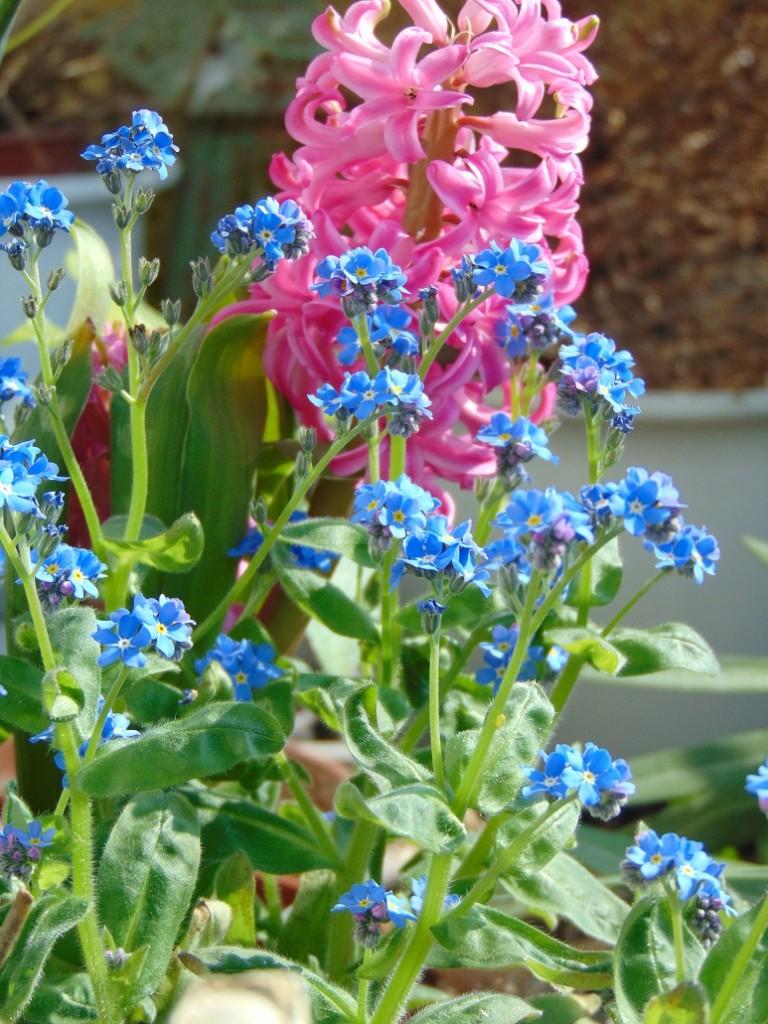 Pozostałe, Moje kwietniowe fotki............... - ................i kwiatki na balkonie...............