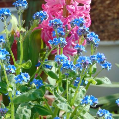 ................i kwiatki na balkonie...............