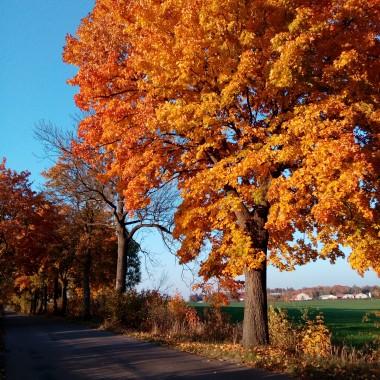 Jesień jest piękna...