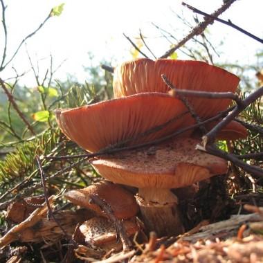 złota jesień w Beskidzie