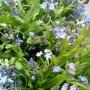"""Dekoratorzy, Majowe robótki.................. - .....................i niezapominajki ..............""""są to kwiatki z bajki""""................."""
