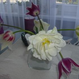Kwiaty w domu i zdziałki .