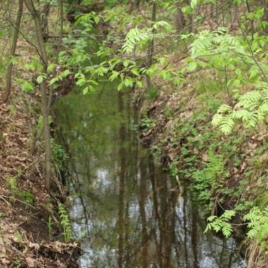 Zapraszam na kilka ujęć wiosennego lasu :)