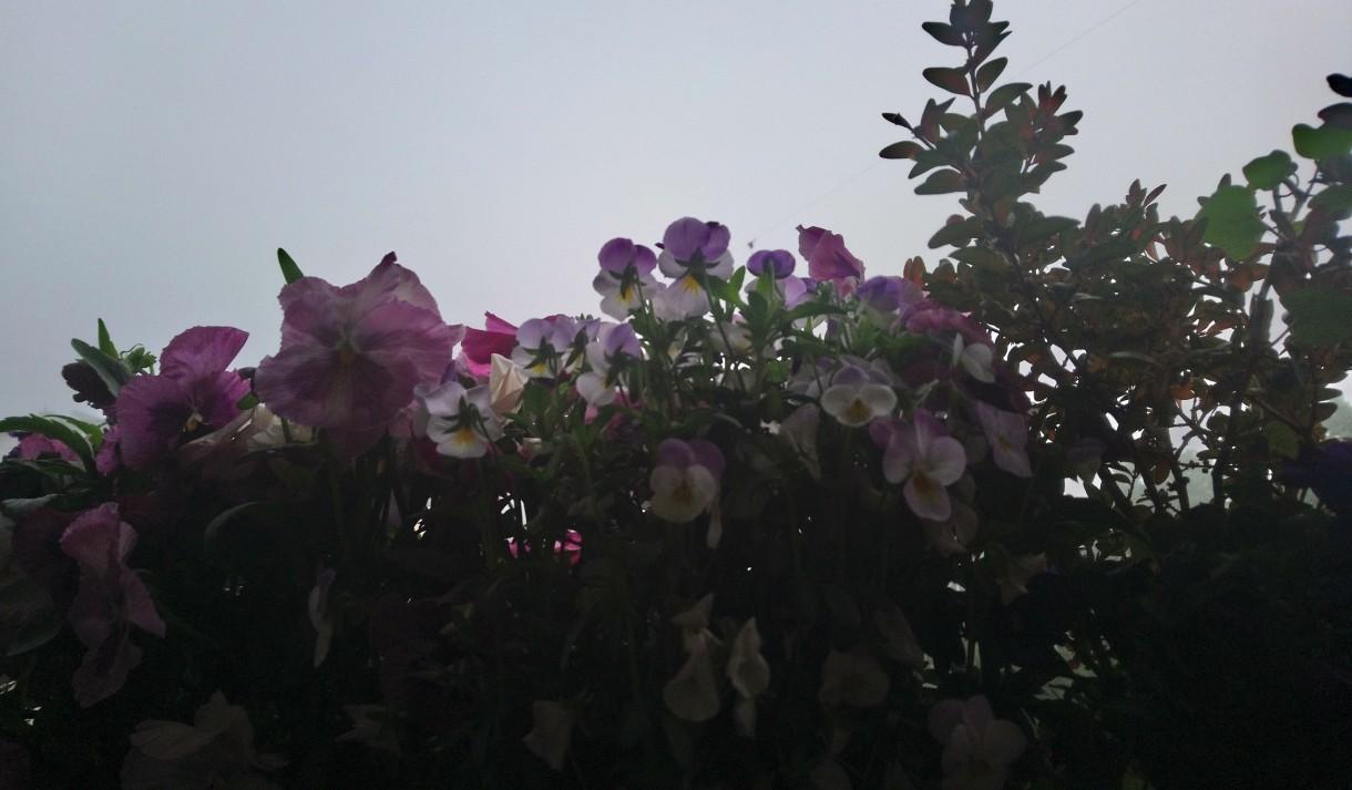 Rośliny, Maj .............naj...................naj...........