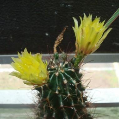 Kaktusy...jakie piekne.